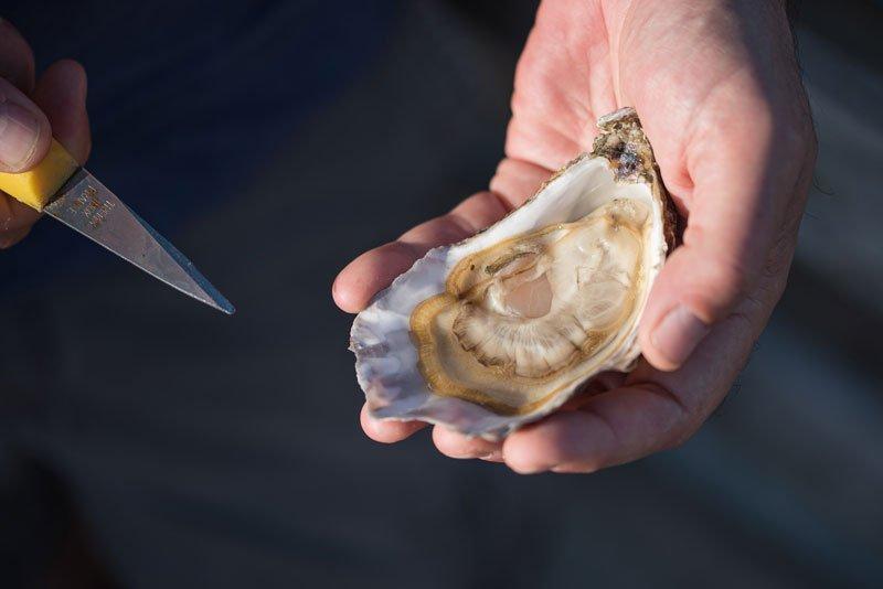 ouverture huître